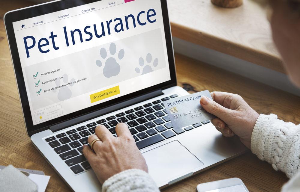 Zoom sur l'assurance animaux