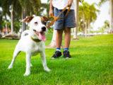 Déplacement d'animaux de compagnie en Espagne